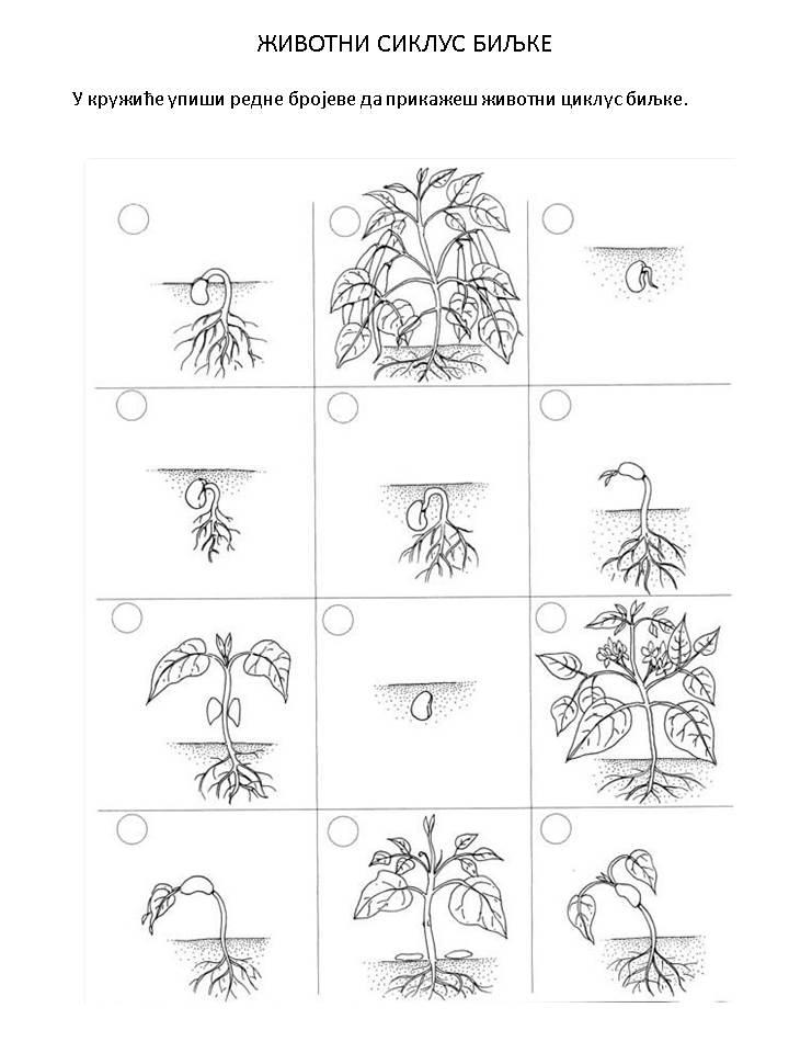 Zivotni ciklus biljke